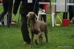 CACIB WROCŁAW (PL): VERY PROMISING ,BEST PUPPY IN BREED ! judge : Mr. Tadeusz Chwalny.